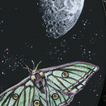 Voyage of the lunar moth